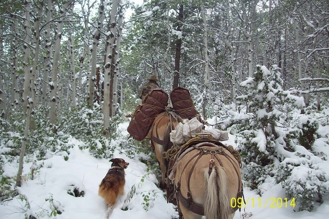Elk Hunt 2014 Snow